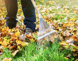 prepare your lawn for canadian winters