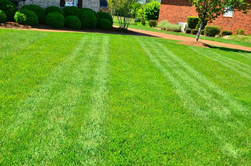 lawn-care-aeration-toronto-markham-lawn-disease-brown-patch-landscaping-prevention-mylandscapers-my-landscapers-landscaper-richmond-hill