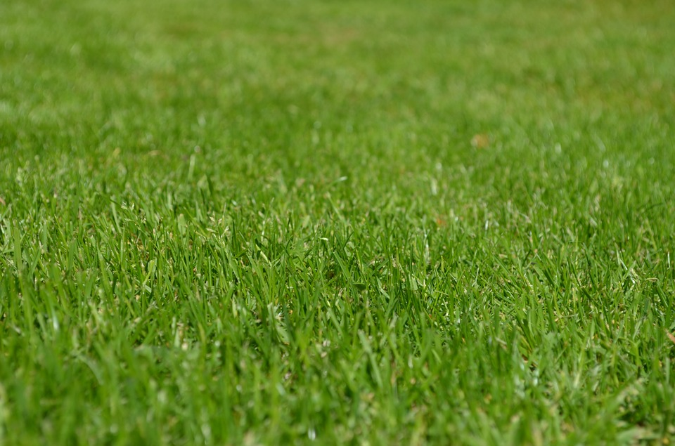 different-species-of-grass-my-landscapers-landscaping-sodding-lawn-care-toronto-north-york-richmond-hill-markham-dufferin-yonge-eglinton-finch-steeles