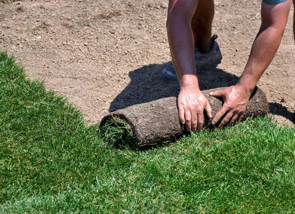 6 tips for new sod care check it out my landscapers for Care for new sod
