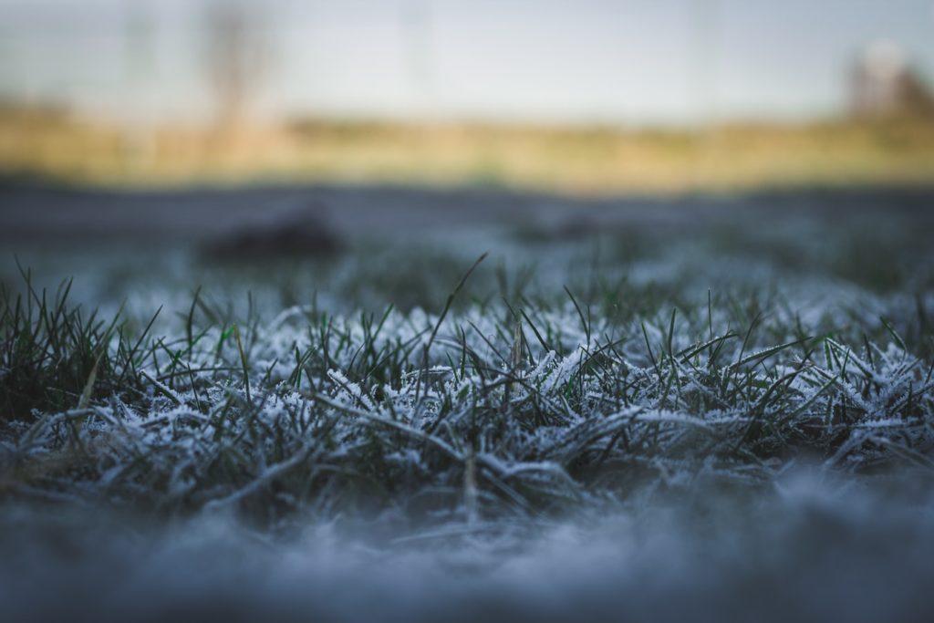 Frost on New Sodding Installation